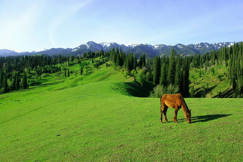 梦一般美丽的那拉提大草原 - 黑玫瑰兰妮 - 黑玫瑰兰妮的博客
